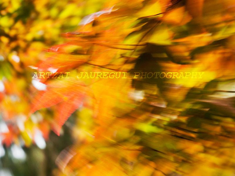 02-Leaf