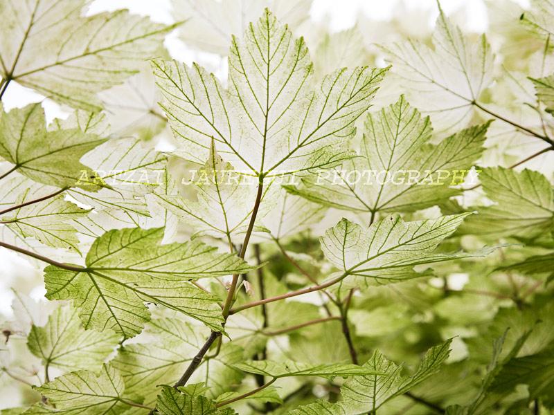 03-Leaf